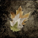 Fall leaves 092-8