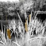 Lake Francis AM Sept 16 2012 006cba