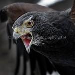 Raptors Dec15 2010 511c
