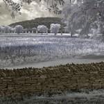 Harpeth Farm IR Jun8 2013 066bb